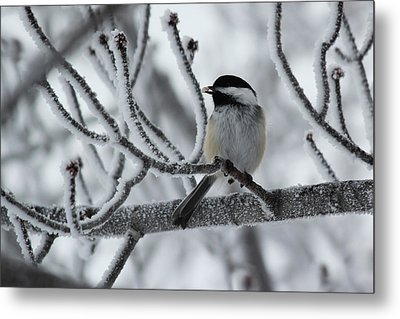 Metal Print featuring the photograph Black-capped Chickadee by Ryan Crouse