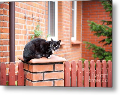 One Lonely Stray Black Cat Sitting On Fence  Metal Print by Arletta Cwalina