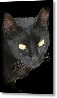 Black Cat Isolated On Black Background Metal Print by Tracey Harrington-Simpson