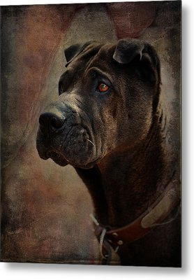 Black Chinese Shar-pei Metal Print
