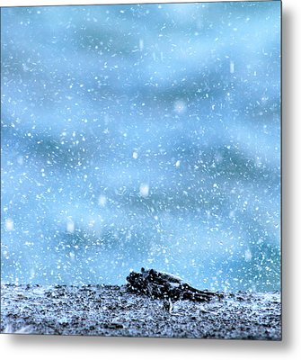 Black Crab In The Blue Ocean Spray Metal Print
