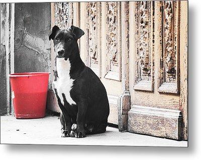 Black Dog Guarding A Vintage Wooden Door Metal Print