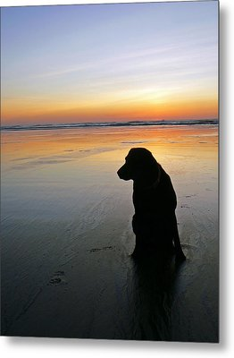 Black Dog Sundown Metal Print by Pamela Patch