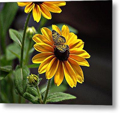 Black-eye Susan With Butterfly Metal Print by Karen McKenzie McAdoo