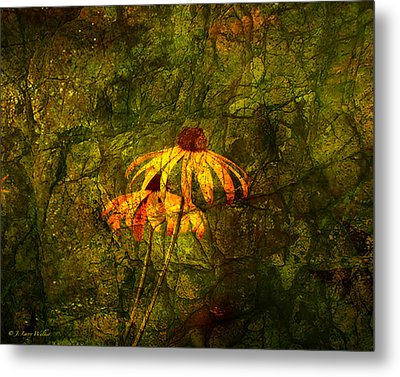 Black-eyed Susan Abstract Metal Print by J Larry Walker