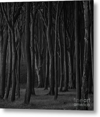 Black Forest Metal Print by Heiko Koehrer-Wagner