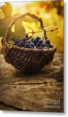 Black Grapes Metal Print by Mythja  Photography
