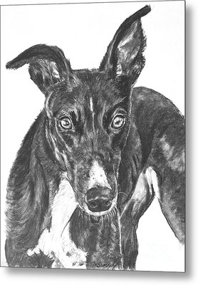 Black Greyhound Sketch Metal Print by Kate Sumners