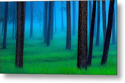 Black Hills Forest Metal Print by Kadek Susanto
