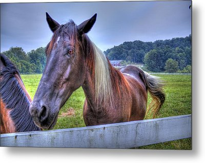 Black Horse At A Fence Metal Print