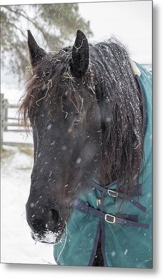 Black Horse In Snow Metal Print