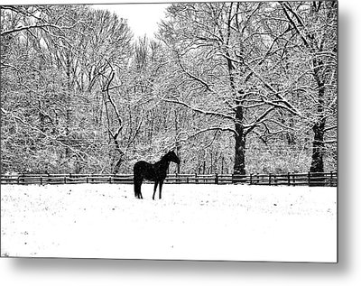 Black Horse In The Snow Metal Print by Bill Cannon