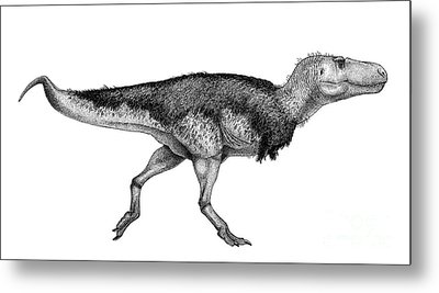 Black Ink Drawing Of Zhuchengtyrannus Metal Print by Vladimir Nikolov