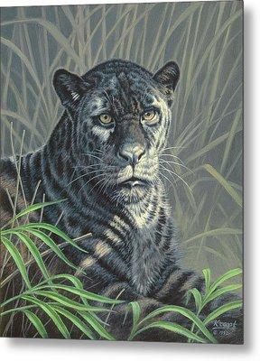 Black Jaguar Metal Print by Paul Krapf
