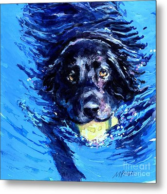 Black Lab  Blue Wake Metal Print by Molly Poole