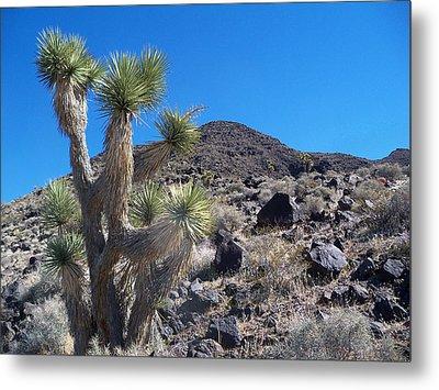 Metal Print featuring the photograph Black Mountain Yucca by Alan Socolik