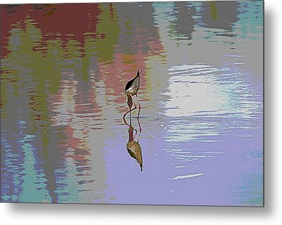 Metal Print featuring the photograph Black Neck Stilt Out In The Pond by Tom Janca