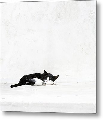 Metal Print featuring the photograph Black On White by Lisa Parrish