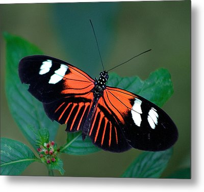 Black Orange And White Metal Print