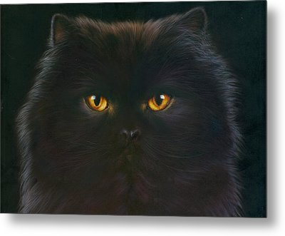 Black Persian Metal Print by Andrew Farley