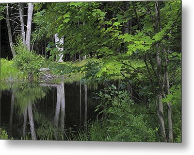 Metal Print featuring the photograph Black Pond And Maple by Colleen Williams