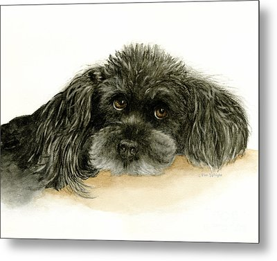 Black Poodle Dog Metal Print
