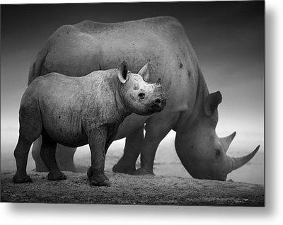 Black Rhinoceros Baby And Cow Metal Print