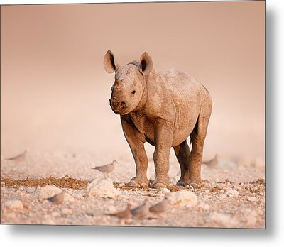 Black Rhinoceros Baby Metal Print