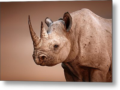 Black Rhinoceros Portrait Metal Print