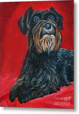 Black Schnauzer Pet Portrait Prints Metal Print