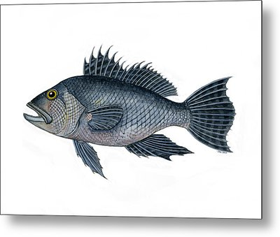 Black Sea Bass 3 Metal Print