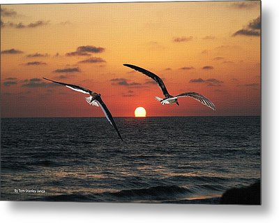 Metal Print featuring the photograph Black Skimmers At Sunset by Tom Janca