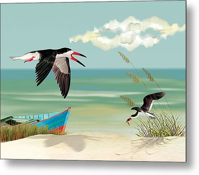 Black Skimmers Fishing Metal Print