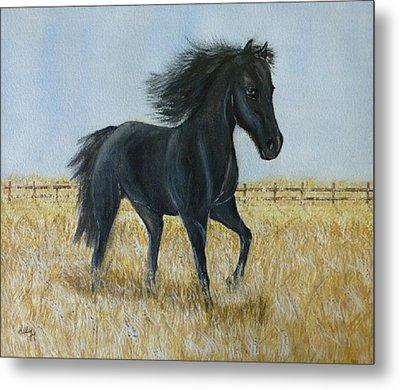 Black Stallion Trot Metal Print by Kelly Mills