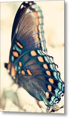 Black Swallowtail Butterfly Metal Print by Kim Fearheiley
