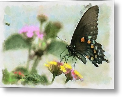 Black Swallowtail Metal Print by Lorri Crossno