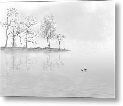 Black Swans Swimming In A Lake Metal Print by Bijan Studio