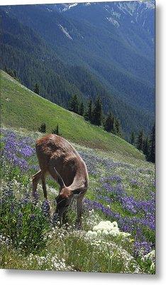 Black-tailed Deer And Lupines Metal Print by Mark Alder