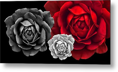 Black White Red Roses Abstract Metal Print by Jennie Marie Schell