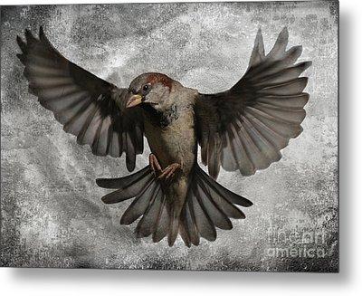 Black Wings Metal Print by Jim Wright