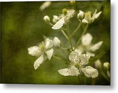 Blackberry Flowers With Textures Metal Print by Wayne Meyer