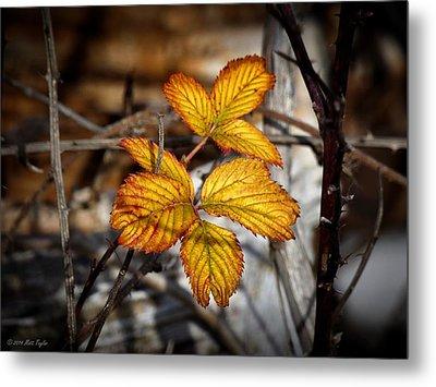 Blackberry Late Autumn Colors Metal Print by Matt Taylor