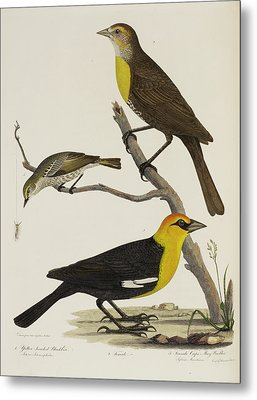 Blackbird And Warbler Metal Print by British Library