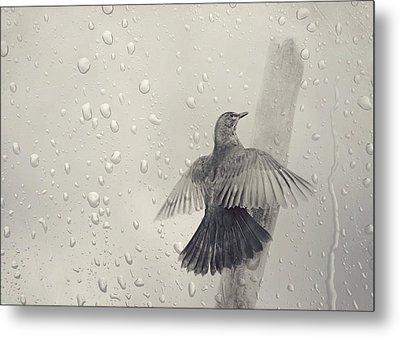 Blackbird In The Rain Metal Print by Heike Hultsch