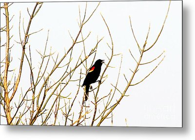 Blackbird Singing A Happy Tune Metal Print by Tina M Wenger
