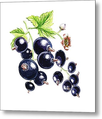 Metal Print featuring the painting Blackcurrant Berries  by Irina Sztukowski