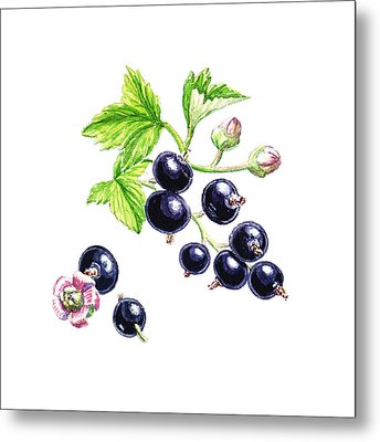 Metal Print featuring the painting Blackcurrant Botanical Study by Irina Sztukowski