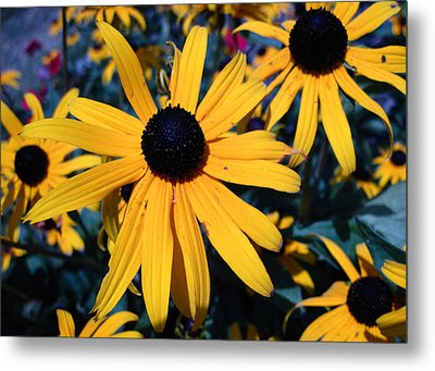 Metal Print featuring the photograph Blackeyed Susan Abstract by Mary Bedy