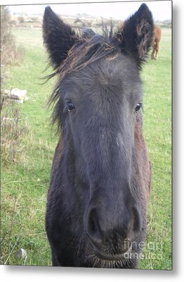 Blackie Metal Print