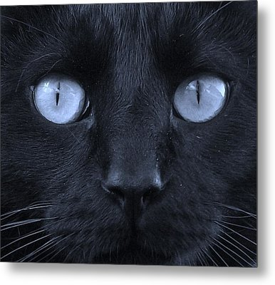 Blackie Blue Metal Print by Elizabeth Sullivan